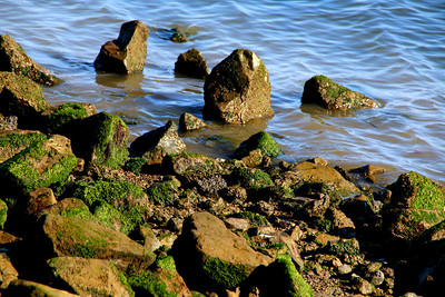The waters of Sausalito, California in the San Francisco Bay Area.