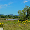 Meadow and lake - Sauvie Island