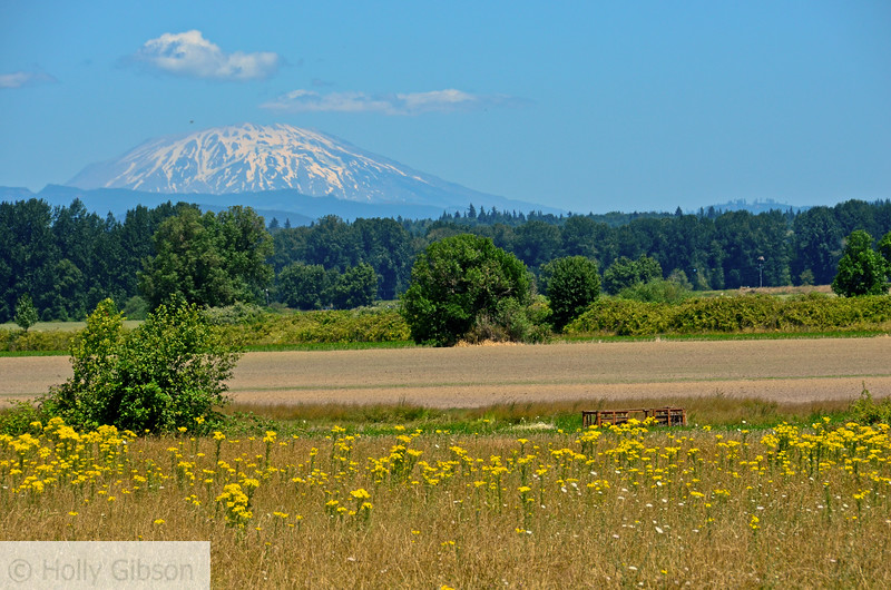 Mt. St. Helens in front of field on Sauvie Island.