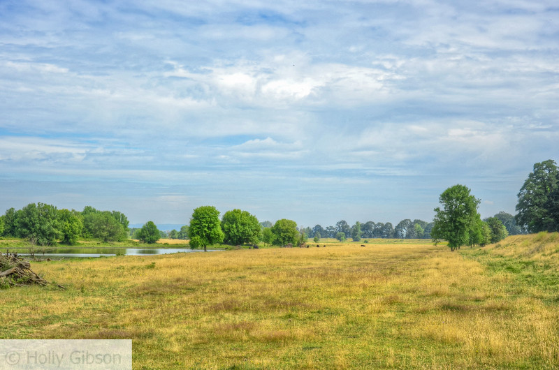 Sauvie Island meadow