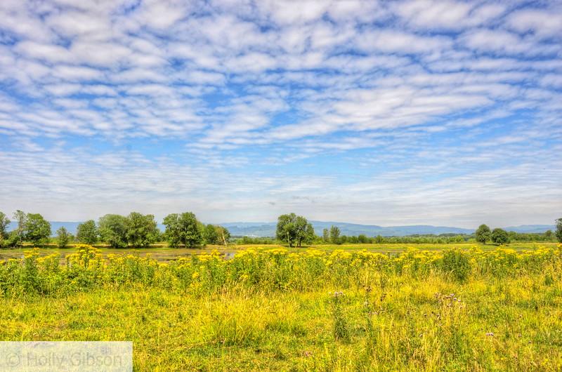 Sauvie Island meadow