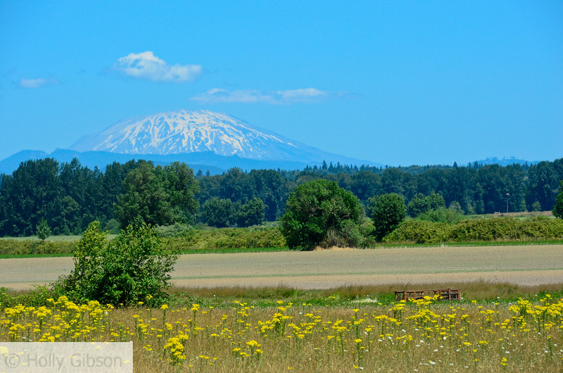 Mt. St. Helens from field on Sauvie Island