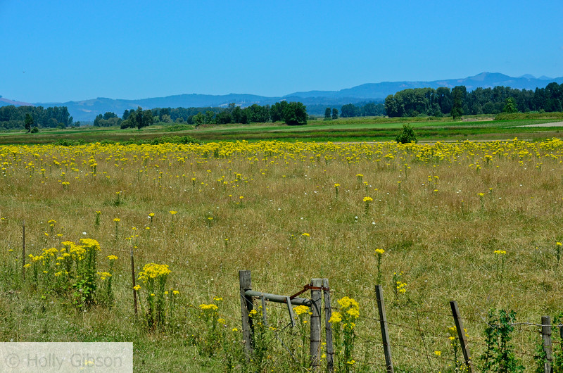 Field on Sauvie Island