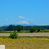 Mt. St. Helens and field
