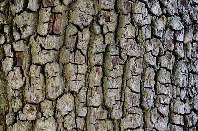 Flatter look of the same cracked trunk.
