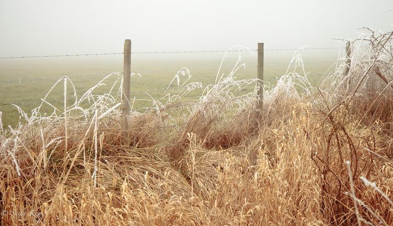 Frozen Fog on Fence