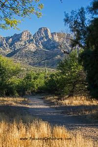 Catalina State Park Bird Trail