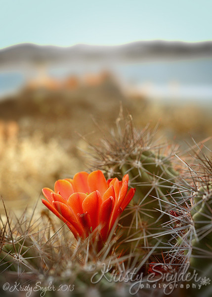 Lakeside Blossom