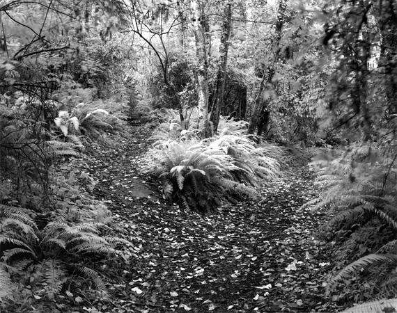 Raider Creek or Campground Trail?