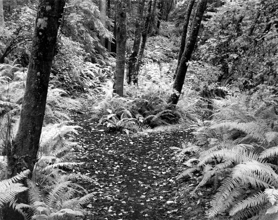Raider Creek or Braveheart?