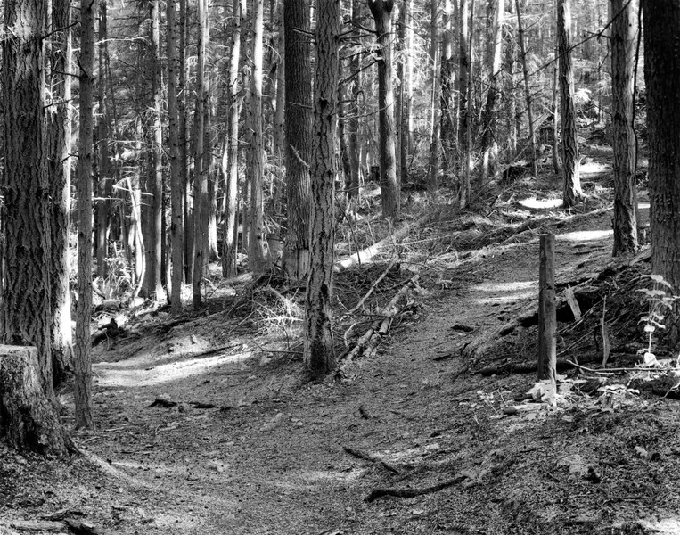 Watertower Trail or Woodpecker Haven?