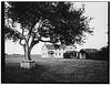 Ebey's Apple Tree  III