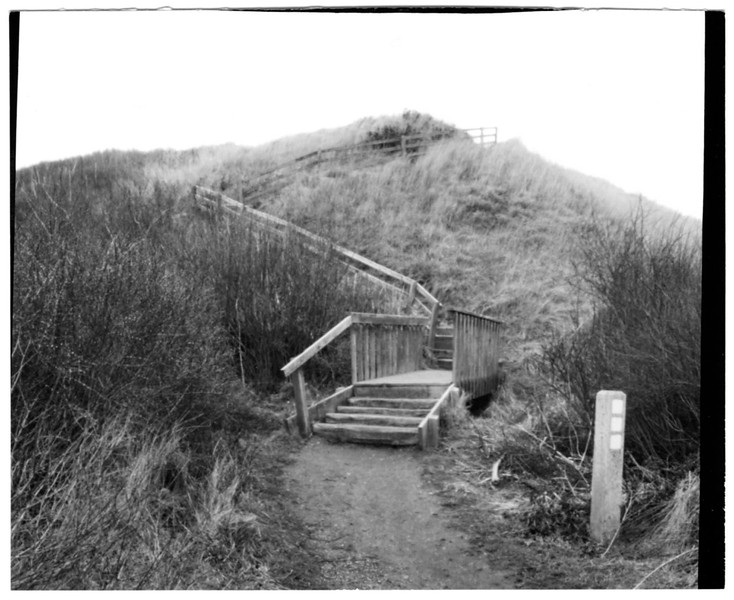 Ebey's Steps  VII