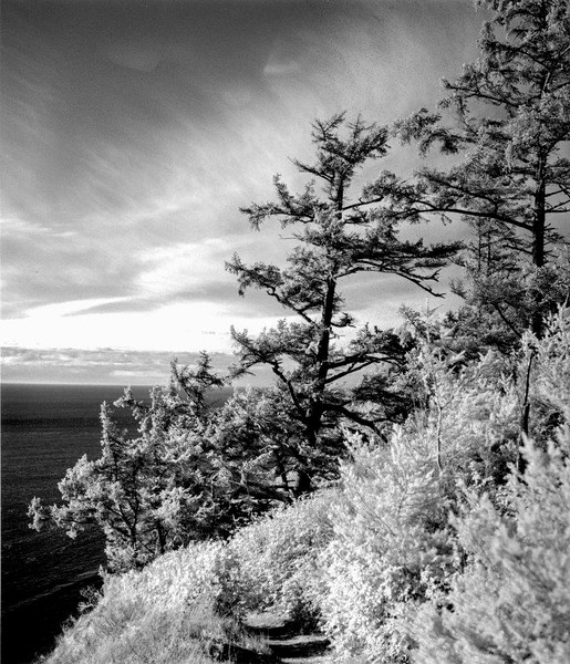Ebey's Bluff Trail, October Afternoon  IV