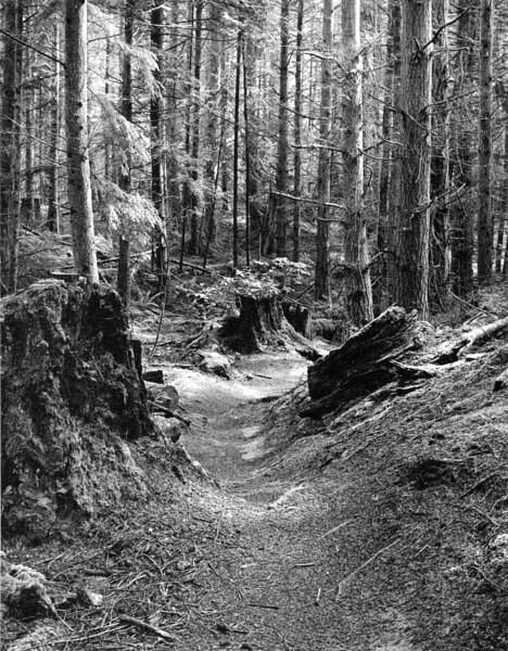 Hokey Ka Do Do Trail  II