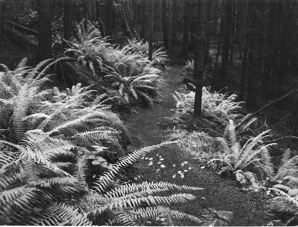 Cedar Hollow ferns