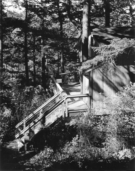 Pondilla Treehouse