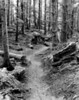 Hokey Ka DoDo Trail  VI