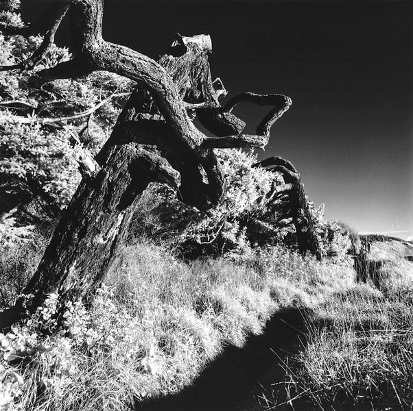 Bluff Trail Trees