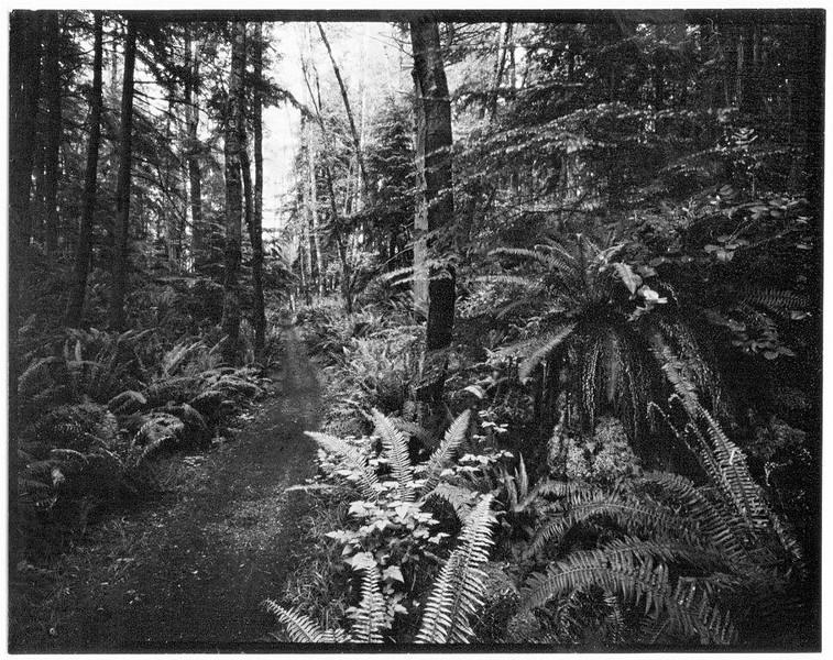 Raider Creek Ferns  II