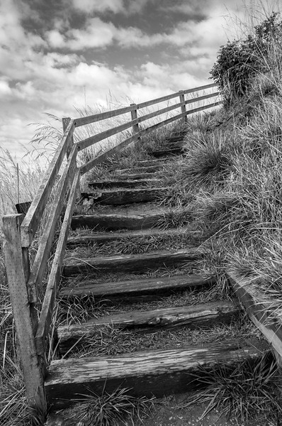 Steps to Ebey's Landing Bluff