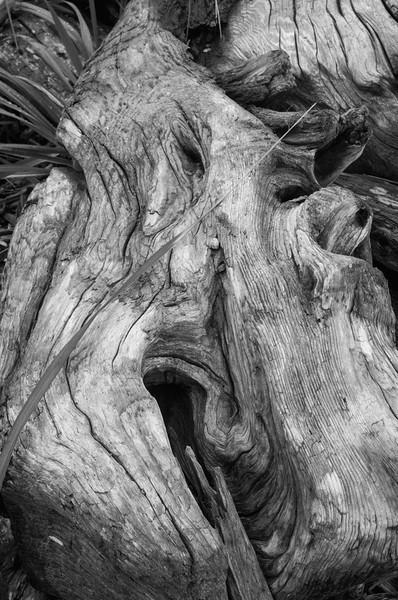 Driftwood, Ebey's Landing