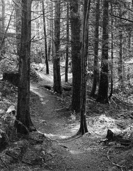 Hokey Ka Do Do Trail  III