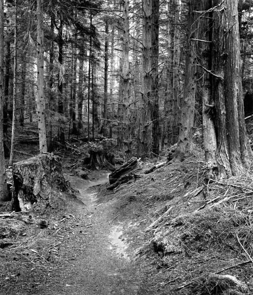 Hokey Ka Do Do Trail  VII