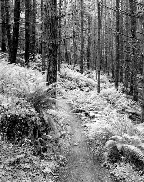 Cedar Grove Trail in September