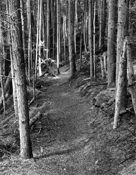 Shepherd's Crook Trail