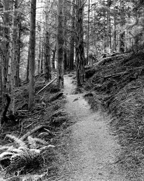 Hokey Ka Do Do Trail (VIII)