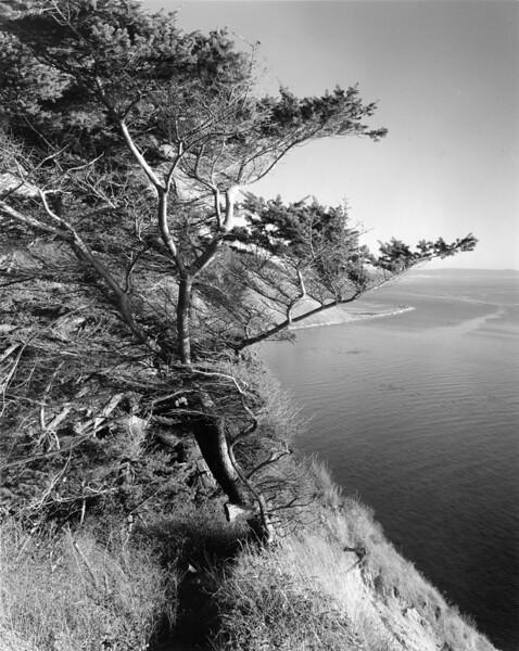Vista Bluff Tree