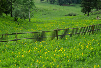 Vibrant Spring greens in the foothills above Fort Collins, Colorado