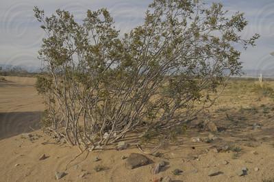 Ridgecrest, desert