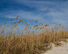 Beach scene 0325 (3 of 4)
