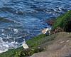 Birds on the shoreline, Ocean City MD