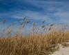 Beach scene 0325 (4 of 4)