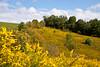 North Carolina field in Fall