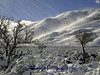 """Winter scene """"Jack's Valley"""", NV at the foot of the Sierra Nevadas."""
