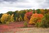 Autumn Tapestry, Waupaca County, Wisconsin