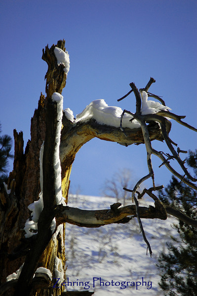 Even a dead tree trunk adds to the winter scenery in the Sierra Nevada mountains.