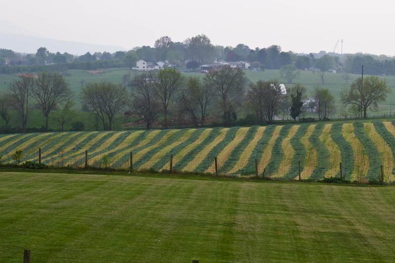 Fresh mowed field-1