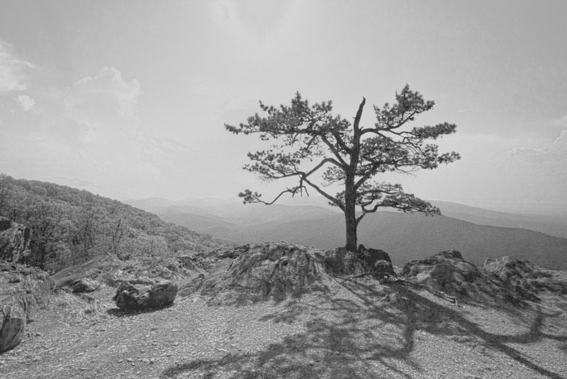 Lone tree in shadows