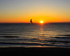 Sunrise and gull at Virginia Beach Virginia
