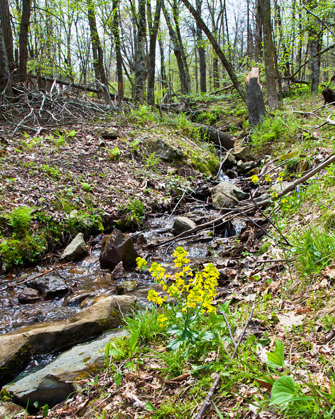Big Meadows Stream