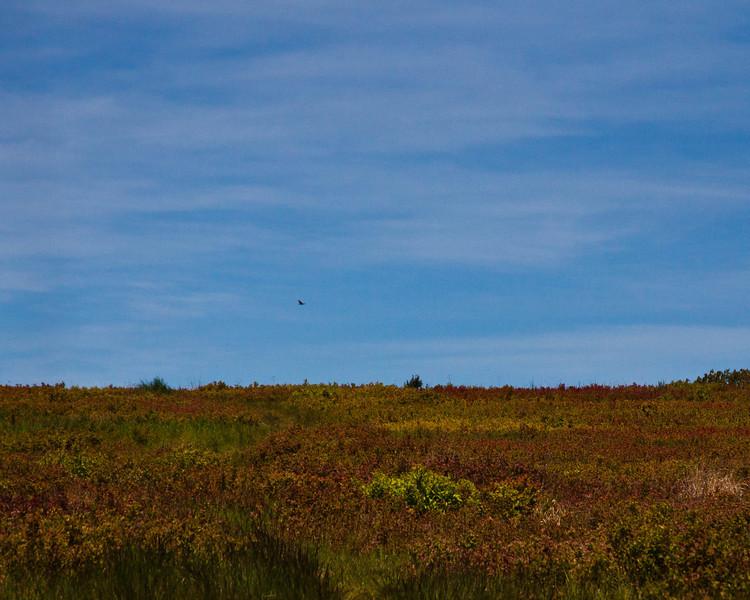 Big Meadows, Skyline Drive