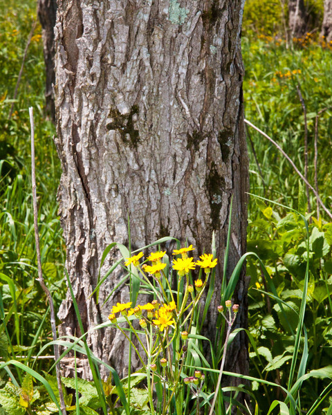 Yellow flowers along the drive