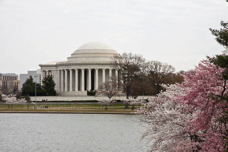 Washington DC and Cherry Blossoms