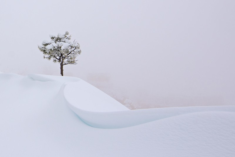 the snow tree
