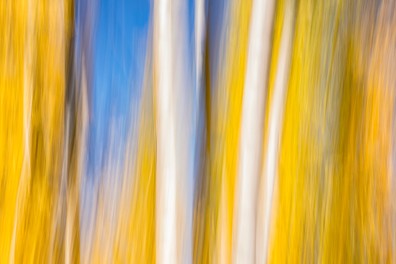 Fall Foliage Color Abstract